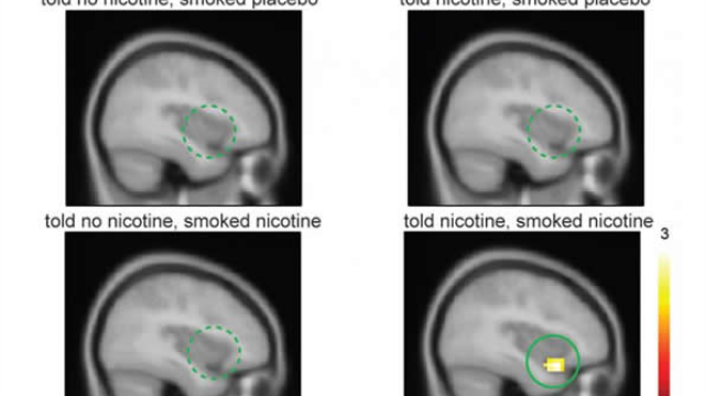 Belief about nicotine content in cigarette may change brain activity and craving
