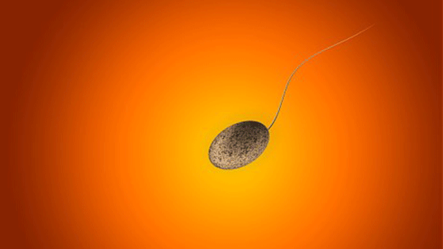 Sperm Production Study Lays Groundwork for Solving Male Infertility