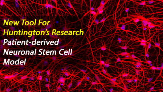 Stem Cells From Huntington's Patients Made Into Neurons, Recapitulate the Disease