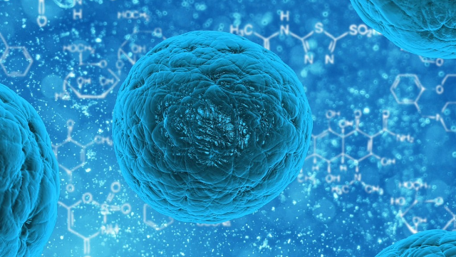 Stem Cells in Drug Discovery
