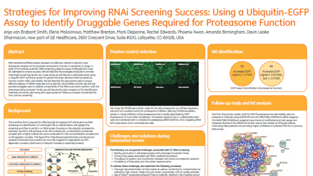 Strategies for Improving RNAi Screening Success: Using a Ubiquitin-EGFP Assay to Identify Druggable Genes Required for Proteasome Function