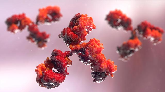 Streamlining Monoclonal Antibody Purification for Therapeutic Candidate Screening