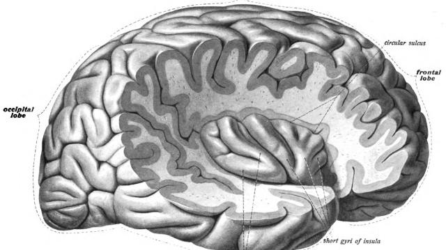 Study Shows Potential to Develop Brain Tumour Liquid Biopsies
