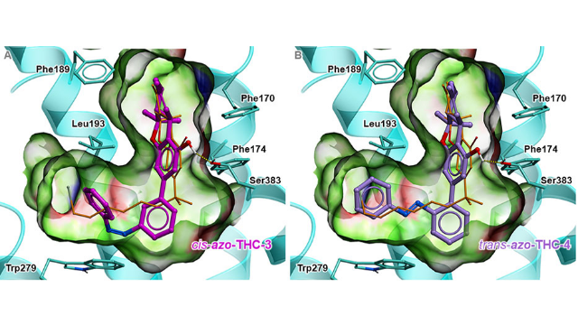 Synthetic THC Enables Optical Control of CB1 Receptor Signaling