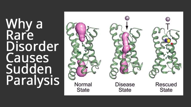 Targeting a Leaky Protein that Causes Paralysis