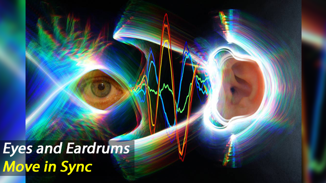 Our Eyes and Eardrums Move in Sync