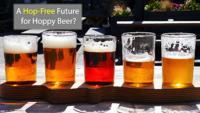 The Future of Hoppy Beer?