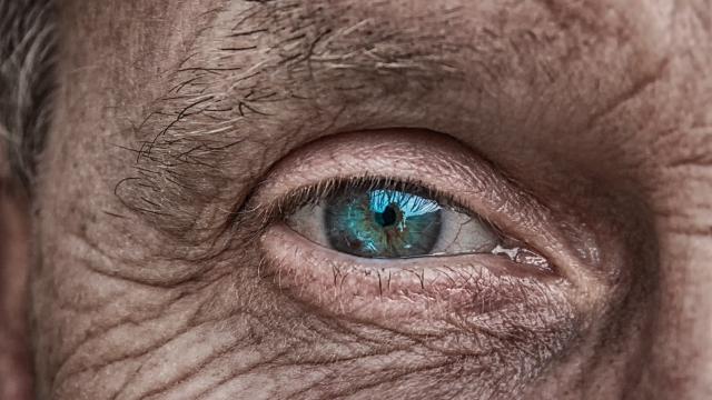 The Future of Lab-Grown Eye Transplants