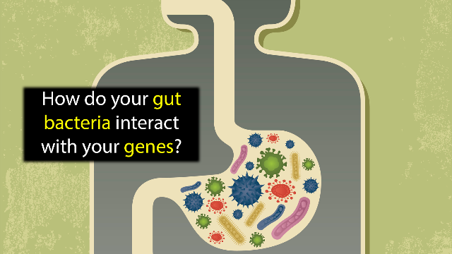 The Germ and the Gene: Gut Bacteria Research Takes a Step Forward