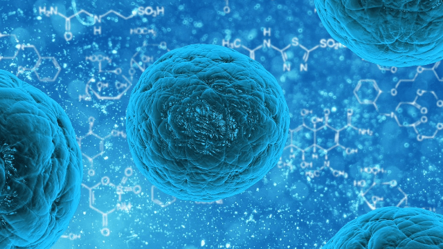 The History of Stem Cells