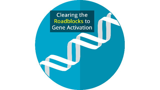 The Missing Factor in Gene Activation Found