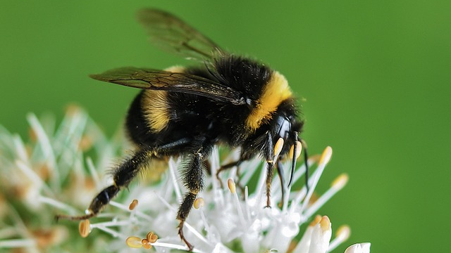 The More Pesticides Bees Eat, the More they Like Them