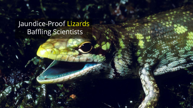 Lime-Green Lizard Blood Baffles Scientists