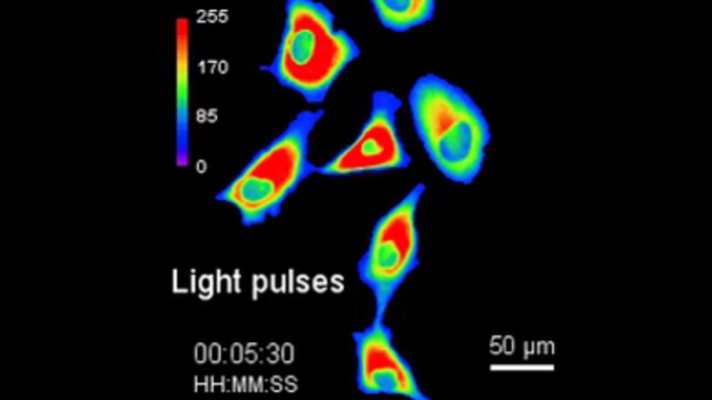 The New 'PhoCl' Point of Optogenetics