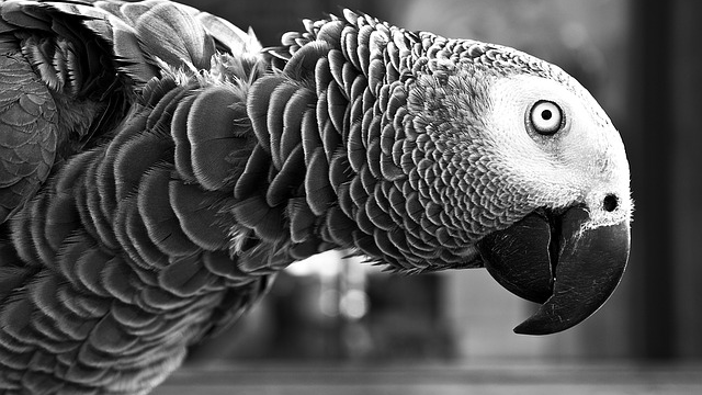 The Secret to Parrot Intelligence is Out