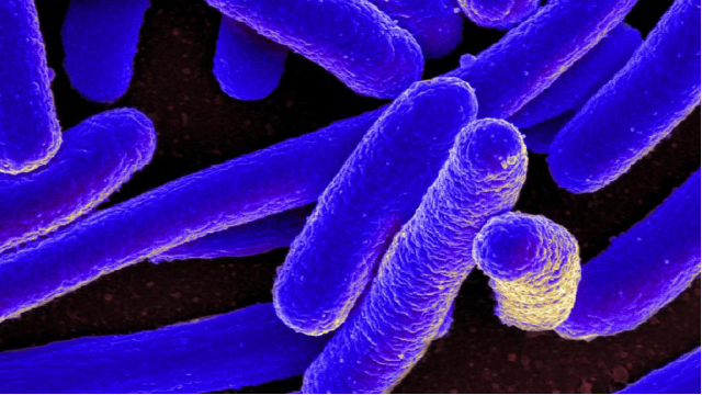 The Unexpected Upside of E. coli