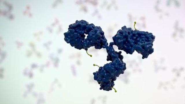 Therapeutic Antibodies: Antibody-Drug Conjugates
