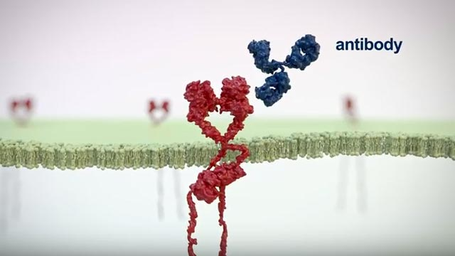 Therapeutic Antibodies: Mechanism of Action