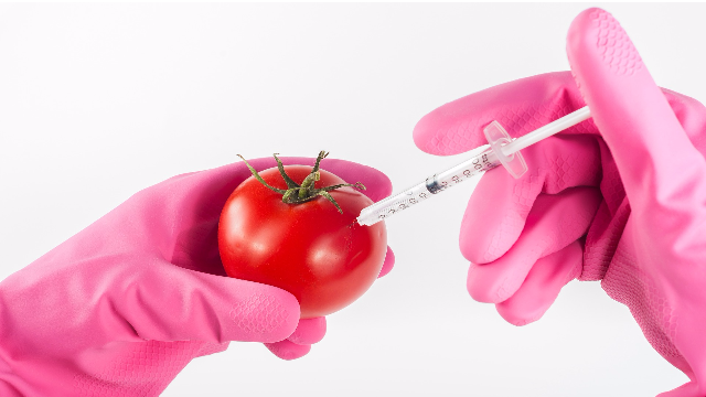 Tomato Flavour Can be Restored Genetically