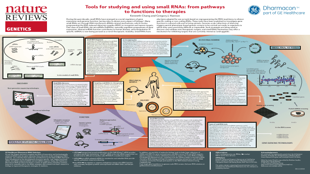 Tools for Studying and Using Small RNAs: From Pathways to Functions to Therapies
