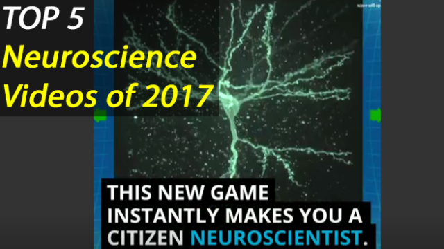Top 5 Most Viewed Neuroscience Videos from 2017