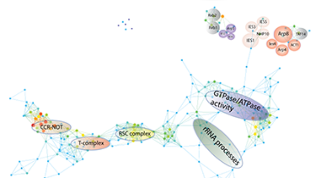 Topological Network Modules in Protein Interactions