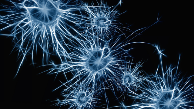 Uncoordinated Firing of Brain Cells Linked to Schizophrenia in Mice