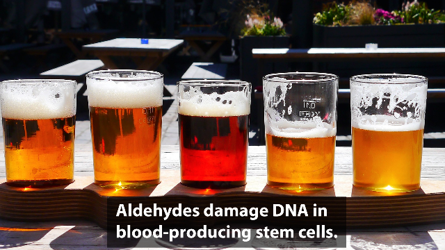 Uncovering How Alcohol-derived Metabolites Damage the Genome of Stem Cells