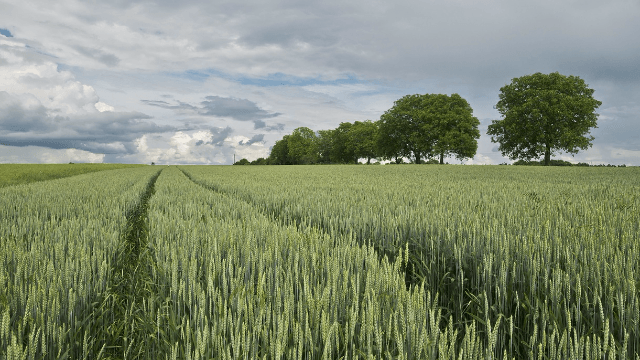 Uncovering Wheat's Hidden Treasures