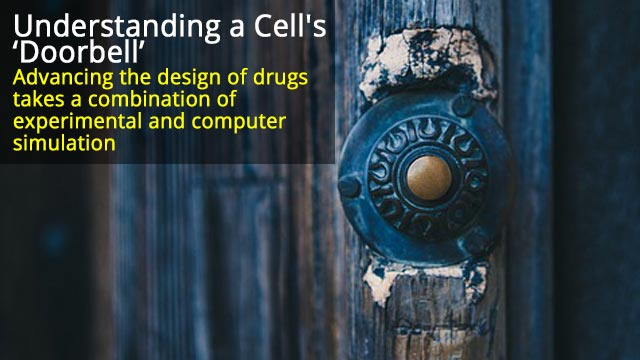 Understanding a Cell's 'Doorbell': Drug Design Advances are the Research Goal