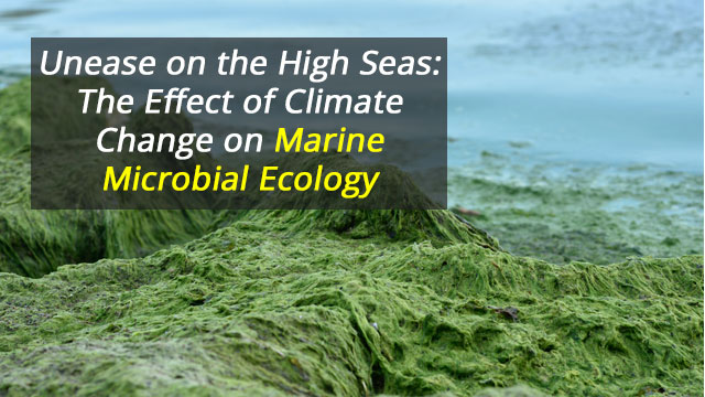 Unease on the High Seas: The Effect of Climate Change on Marine Microbial Ecology