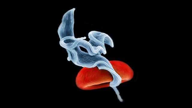 Unique Role for tRNA-derived RNA Fragments in Parasites