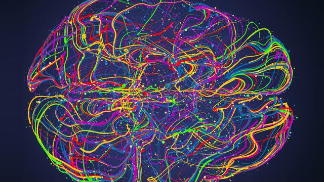 Unlocking the Secrets of Brain Organization -in the Fruit Fly