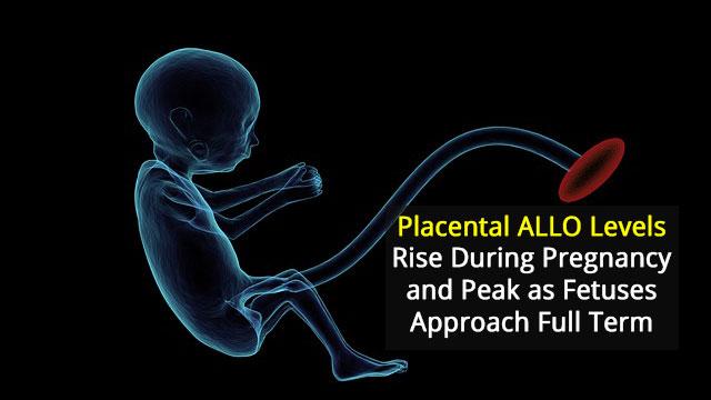 Unravelling Placental Hormone Patterns