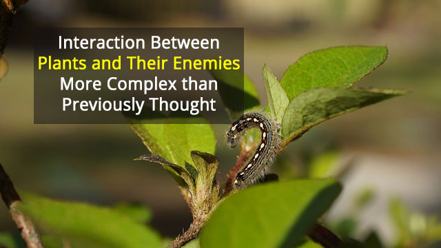 Virus Inhibits Immune Response of Caterpillars and Plants