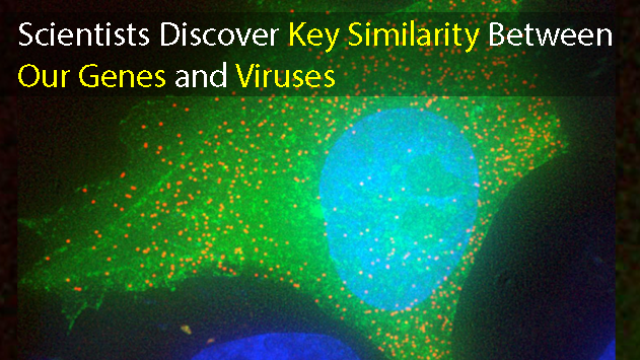 Virus vs Human: Gene Similarities Offer Cellular Defense Insights