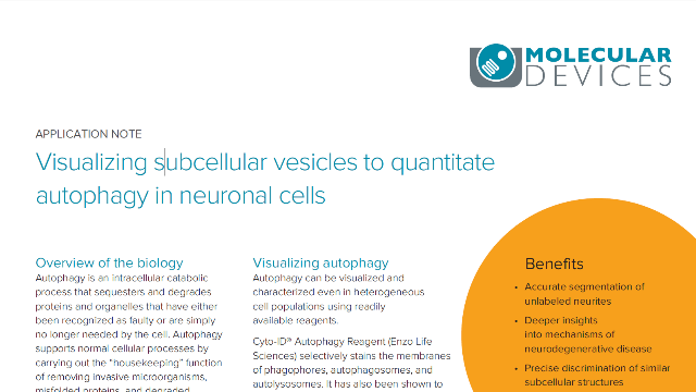 Visualizing Subcellular Vesicles to Quantitate Autophagy in Neuronal Cells
