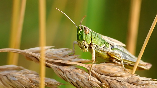 Warming Climate Means More Insects Hungry for Crops