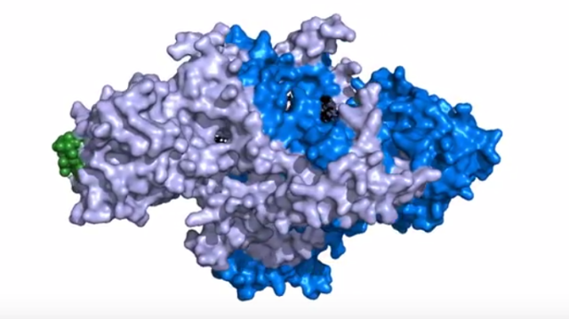 Watch: Atomic Structure of Telomerase Gives Insight into Cell Life and Death
