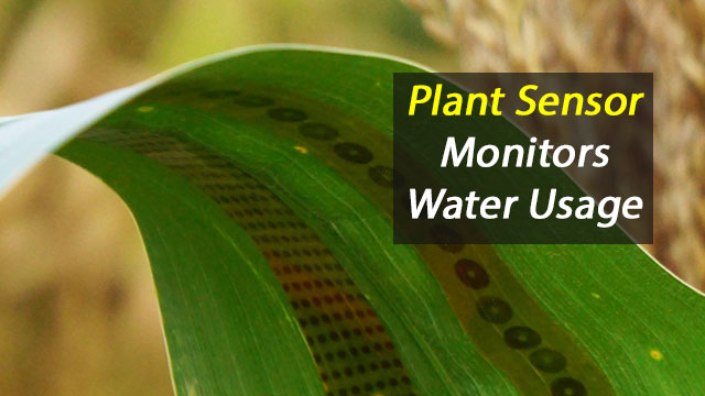 Wearable Plant Sensor Monitors Crop Water Transit