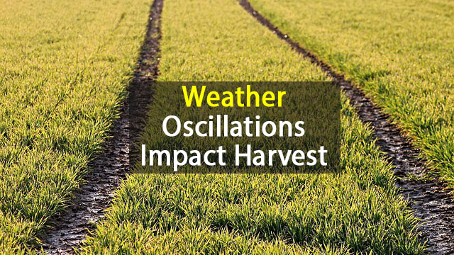 Weather Phenomena Affect Up to Two-Thirds of the World's Harvests