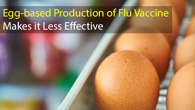 Why is Egg-based Production of the Flu Vaccine Causing Issues?