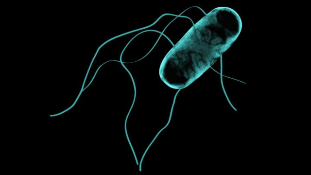 Window into Salmonella Strain Ravaging Sub-Saharan Africa