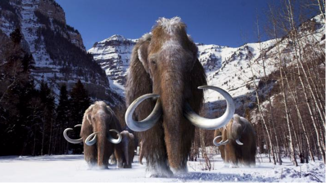 Woolly Mammoths had a Mutational Meltdown Before Extinction