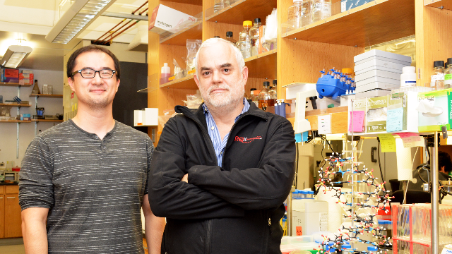 World's First Stable Semisynthetic Organism