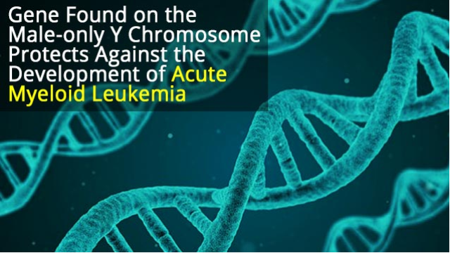 Y Chromosome Gene Protects Men Against Aggressive Leukemia