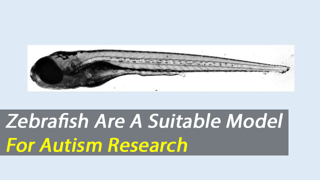 Zebrafish Are a Promising New Model For Autism Research