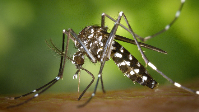 Zika Virus Persists in Brain and Lymph Tissue for up to 72 Days