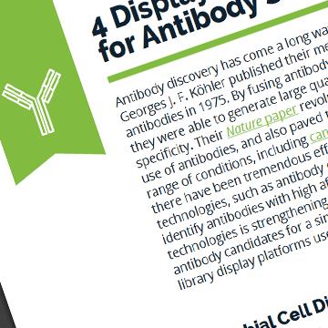 4 Display Library Platforms for Antibody Screening