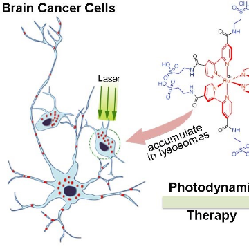 A Unique Amino Acid for Brain Cancer Therapy